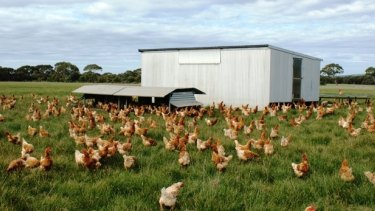 Kathy Barrett has fewer than 1500 hens per hectare at her Katham Springs farm on Kangaroo Island.