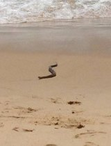 The snake emerge from the sea.
