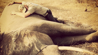 Prince Harry shared this picture of him with a sedated elephant during his summer tour of Africa to his family's Instagram account.