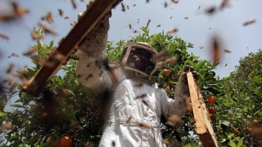 Manuka honey hits pay dirt.