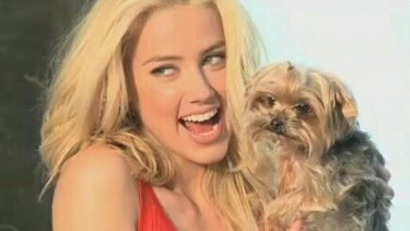 Amber Heard did not appear in court on Monday over the illegal importation of her dogs.