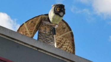 The owl was meant as a deterrent.