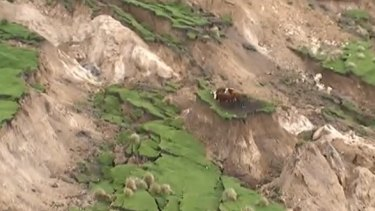 Cows and sheep stranded by landslides.