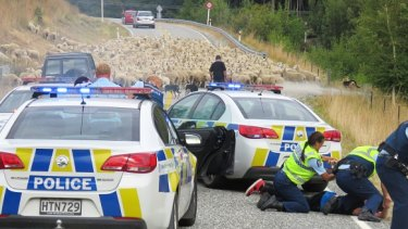 A flock of sheep stop a driver after a 90-minute police pursuit.