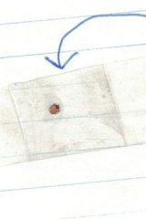 In the first letter Tom sent to Jean, he enclosed a tick he had recovered from under his arm.