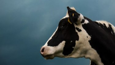 China has slashed imports of dairy commodities by almost 50 per cent.