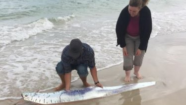 Donna Moule, her brother Mark and a local woman tried to help the oar fish get back into the water.