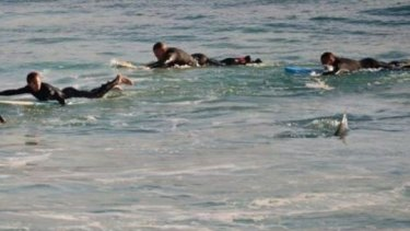 Surfers were forced to flee the water at Mettams Pool earlier this year.