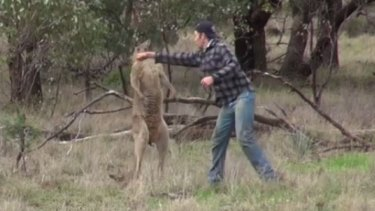 The video showing a man punching a kangaroo after it attacked his dog went viral.