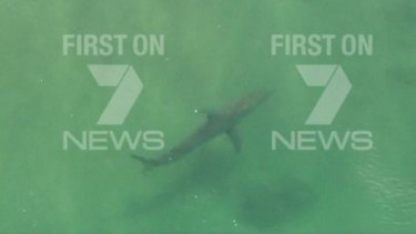 A shark spotted in the area on Thursday afternoon.