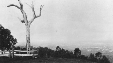 View looking down on Brisbane from Mount Coot-tha in the late 1890s.