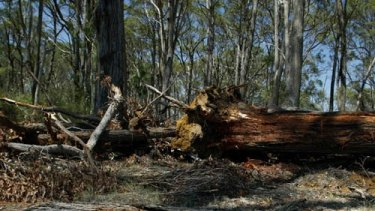 Biodiversity at risk: Land clearing in northern NSW.