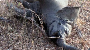 One of 200 elephants slaughtered for their tusks in Cameroon during a killing spree in 2012.