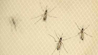 Mosquito spraying has begun at a second site in Queensland after a man showed symptoms of the Zika virus.