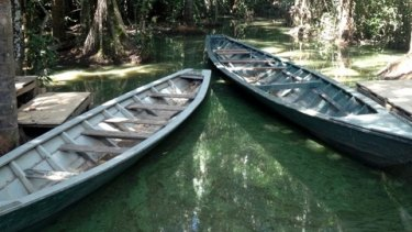 A quiet corner of the Amazon river.