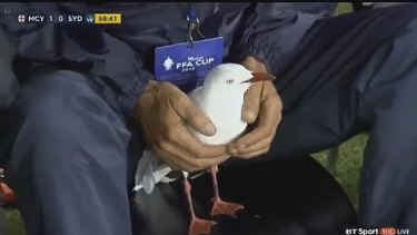 The injured seagull seemed pretty content after being hit by an errant soccer ball.