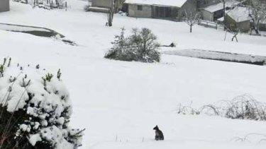 Anton sitting in a snowy backyard near the town of Braunau.