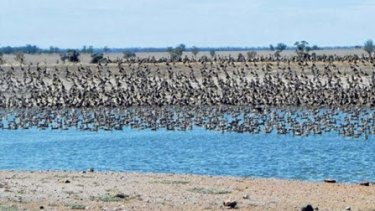 Mia Hunt's photograph of a large flock of ducks.