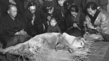 The funeral of Hachiko the faithful dog in Tokyo in 1935.