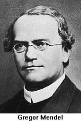 Pioneer: Gregor Mendel is regarded as the father of genetics and his classic work on dominant and recessive genes is still essential learning.