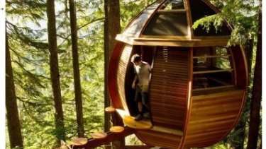 A tree hut immersed in a pine forest.