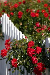 Flower gardens in bloom can increase property values.