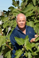 Darryl Hardie checks figs for QFly in Alfred Cove.