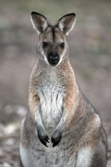 Moderate-risk activities, such as commercial kangaroo harvesting, will be covered by a code of conduct on the annual list.