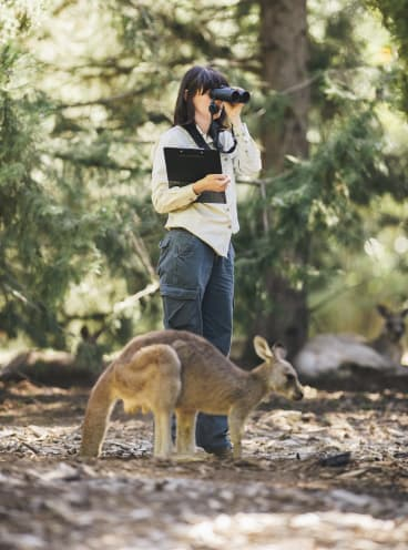 Kangaroos in the government's long-running fertility trial in Weston Park: The estimates committee says the government should review whether the trial is fiscally responsible.