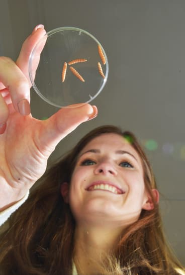 Melbourne University's Clare Anstead with her blowfly test subjects.