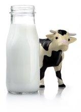 To drink or not to drink: unpasteurised milk.