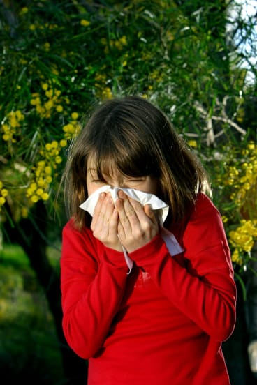 Hay fever sufferers be warned - the worst of Canberra's pollen levels  could be yet to come.