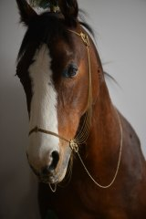 <i>Pegagus</i>, a taxidermied Clydesdale horse, in Julia de Ville's Collingwood gallery and showroom.