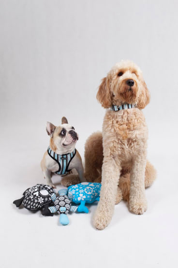 Social media has helped drive business to Dogue.