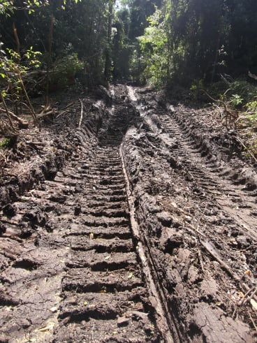 Tracks from forestry equipment in Cherry Tree State Forest.