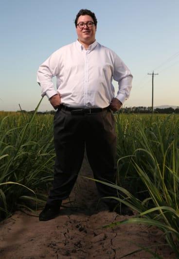 George Christensen in a sugar cane field near Mackay.
