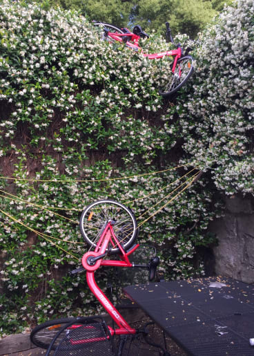 Two Reddy Go bikes dumped over the fence into a Sydney backyard.
