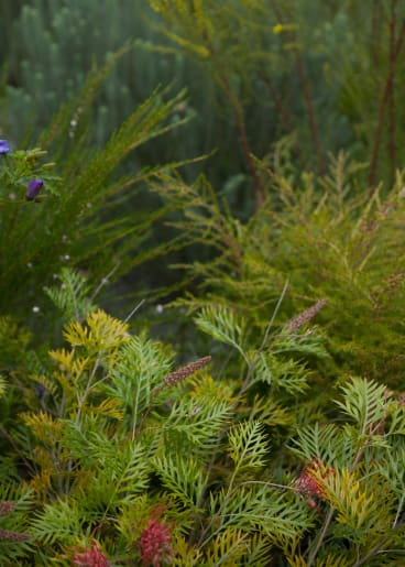 A mix of Australian plants were grouped together as part of the project.