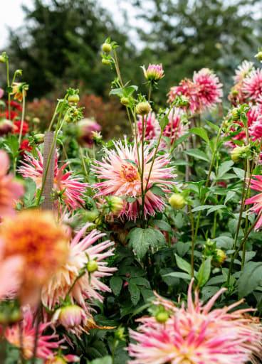 Lucy Culliton's garden in Bibbenluke, New South Wales.