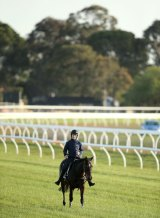 Owner of Melbourne Cup runner Max Dynamite, Rich Ricci, would like to see more jumps cards in Australia.
