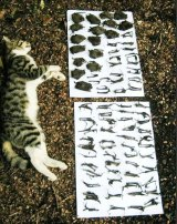 The voracious appetite of a feral cat is revealed by all the creatures it has eaten laid out beside it.