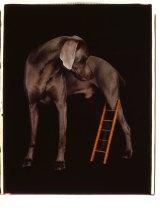<i>Leg Ladder</i>, 2004.