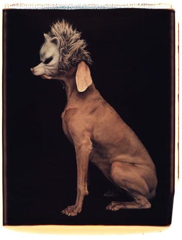 <i>Wolf</i>, 1994.