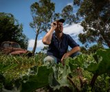 Wayne Shields among his damaged crops which are being affected by urban encroachment.