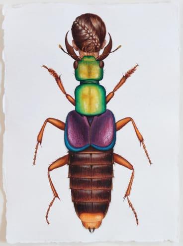 Deborah Klein, <i>Actinus Imperialis Beetle Woman</i>, 2014, watercolour.