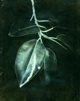 James Tylor, <i>Terra Botanica I (grevillea banksii)</i>, Tarrawarra Biennial 2016