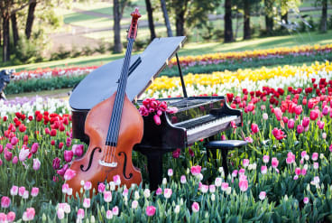 The Tesselaar Tulip Festival in Sylvan embraces gastronomy, grapes and grooves with a food, wine and jazz weekend.