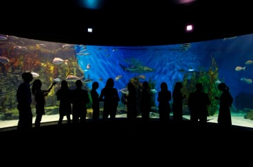 See in the new year among the tropical marine life at Sea Life Melbourne.