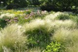 Dry prairie planting at Hermannshof garden, Germany.