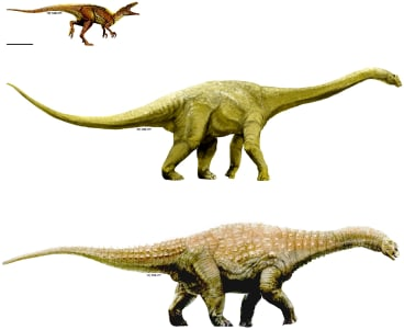 Artistic representations of the three dinosaur taxa described here. Australovenator (top); Wintonotitan (middle); Diamantinasaurus (bottom).
